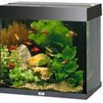 Du burde få et akvarie (foto petworld.dk)