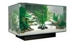 billige akvarier (foto: petworld.dk)